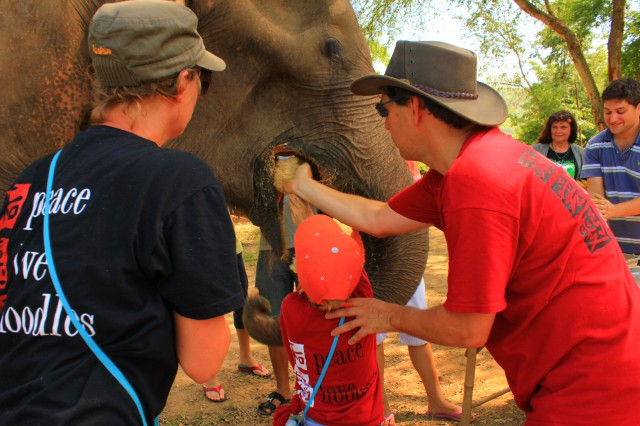 Feeding the elephant with self prepared food